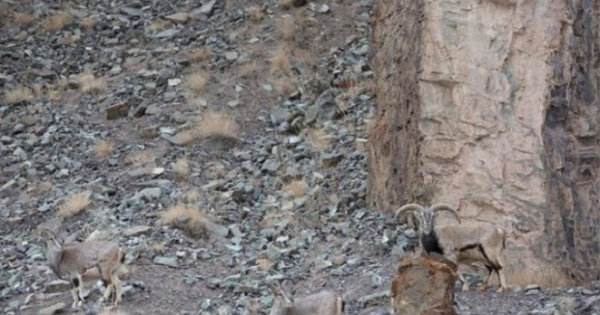 Тест на зоркость: найди на этом фото леопарда.