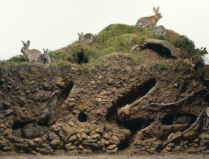 15. Кроличья многоэтажка для всей семьи вещи, внутри, изнутри, подборка, разрез, фото