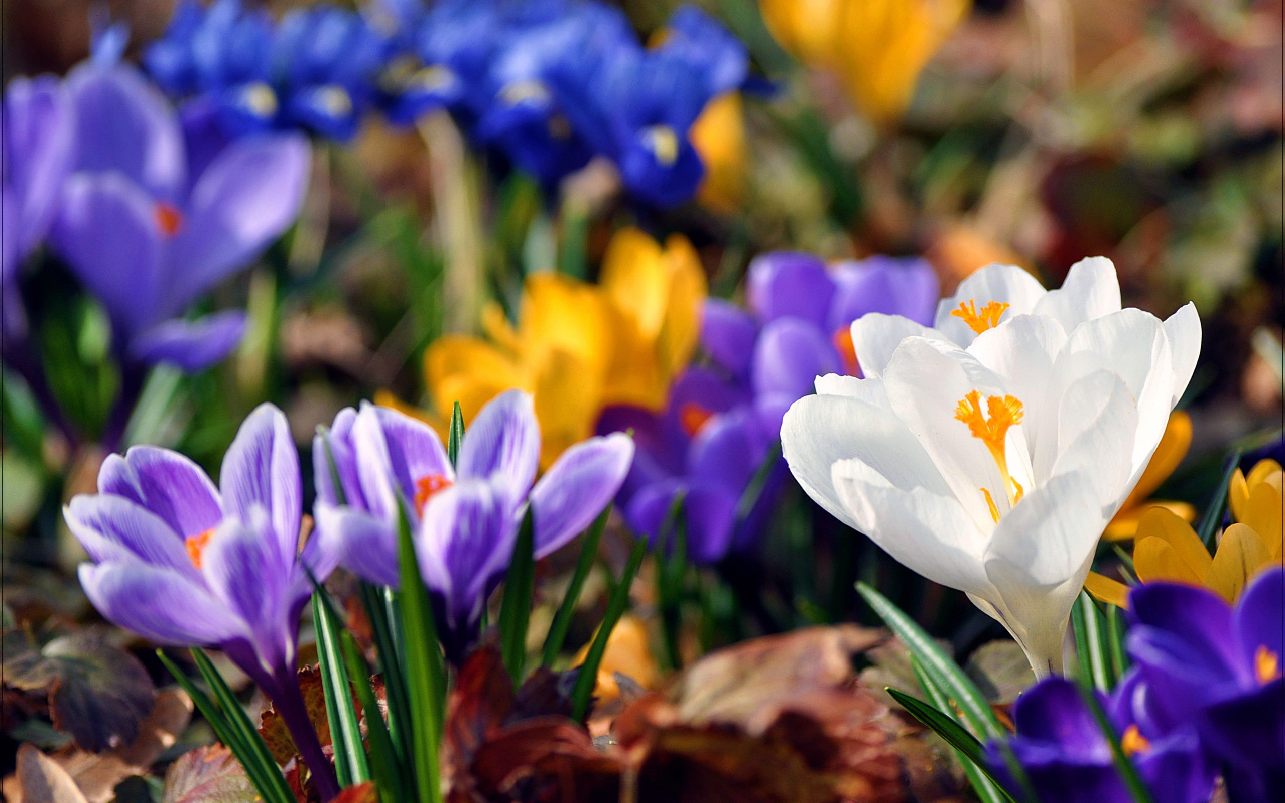 Весна фото красивые обои