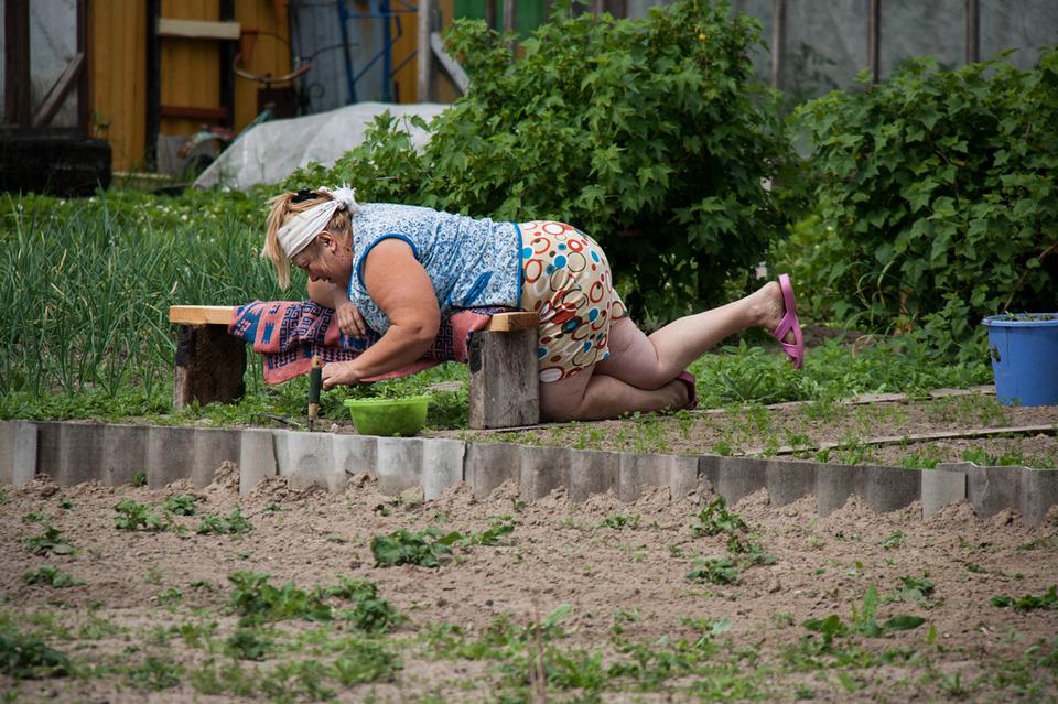 Смешные огородные картинки