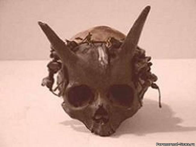 Тайны Гоби: монстры и война с …инопланетянами?
