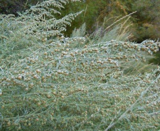 Какие травы полезны в бане