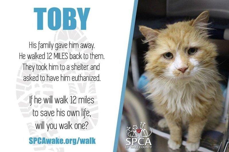 Тем временем SPCA опубликовало пост в соцсетях о Тоби, и его история быстро стала вирусной в мире, домашний питомец, животные, история, кот, семья