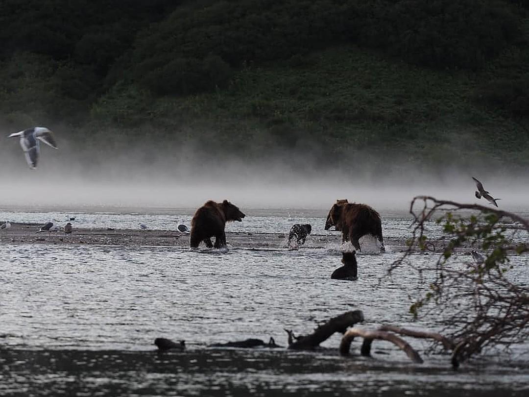 Неожиданно для всех один из самцов набросился на медвежонка, вероятно, не хотел делиться лакомствами. ФОТО: Владимир Омелин.