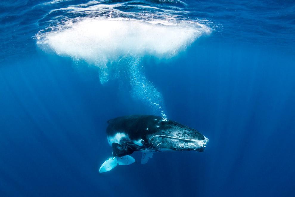 Плавание с величественными китами