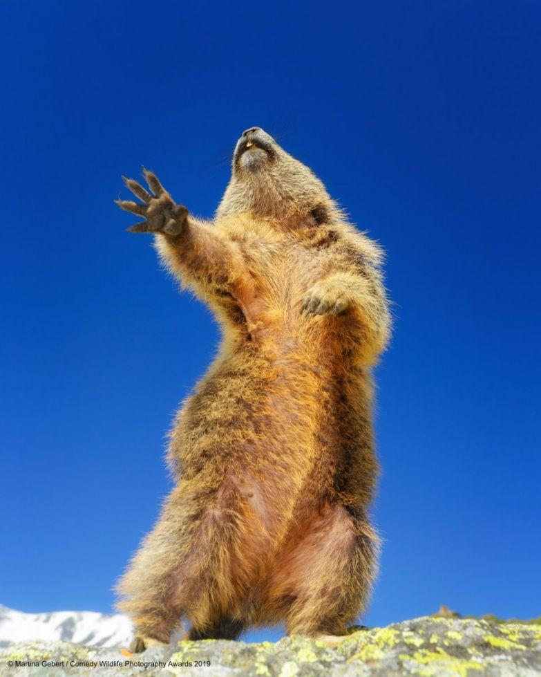 Свежие прикольные картинки про животных