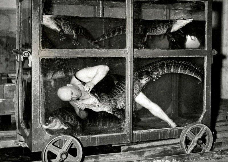 Цирковой артист в вагоне-аквариуме с крокодилами. Берлин, 1933 год. история, ретро, фото