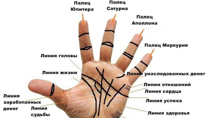 Как правильно читать все главные линии на ладони