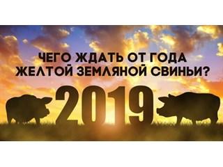 Мир в год Свиньи