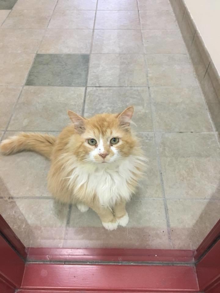 Понадобилось некоторое время, чтобы вылечить Тоби, прежде чем искать ему новую семью в мире, домашний питомец, животные, история, кот, семья