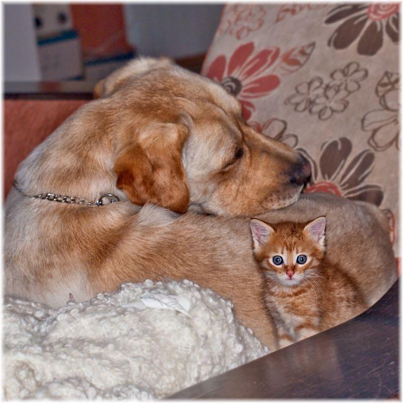 Фото собак и кошек приколы, клевая