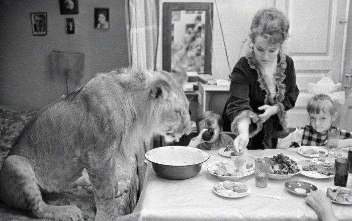 Как снимали животных в культовых советских фильмах: Мучения режиссёров и тоска четвероногих актёров животные