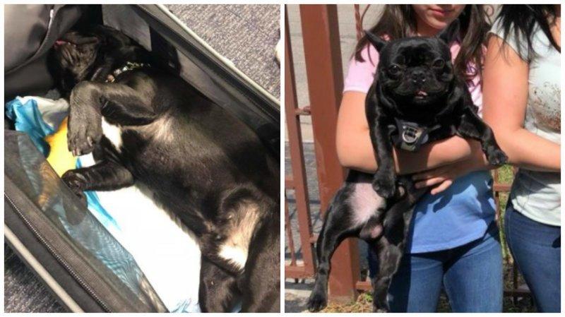 Стюардесса потребовала поместить пса на багажную полку, и он там скончался