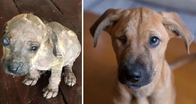Собаки – самые преданные и искренние спутники человека