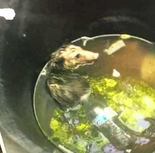 Несчастный зверек тонул в баке с мусором… Человек услышал странные звуки и заглянул внутрь