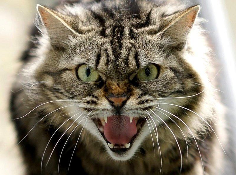 Прикольны картинки злого кота, что