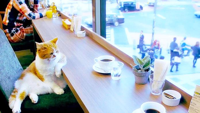 Кошка заходит в кафе, заказывает кофе и пирожное...