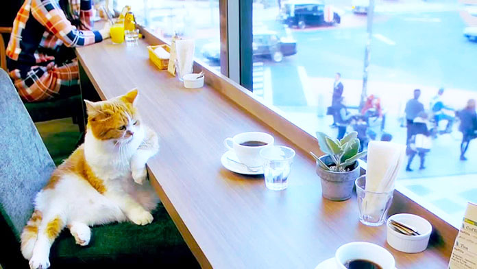 Кошка заходит в кафе, заказы…