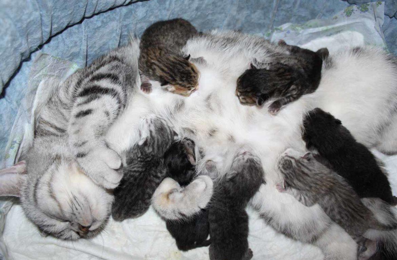 Картинки кошка родила