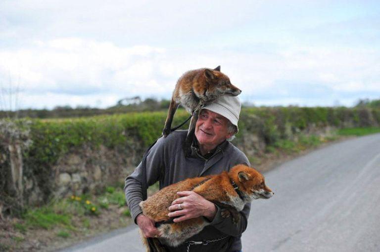 Мужчина спас двух лис, и теперь они без ума него