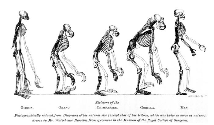 Ученые предлагают пересмотреть теорию происхождения человека.