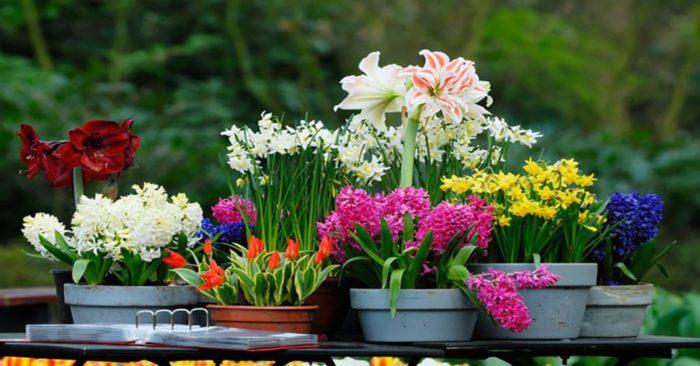 Вот это да! Чтобы комнатные растения цвели часто и подолгу нужно поливать их ЭТИМ раз в месяц!