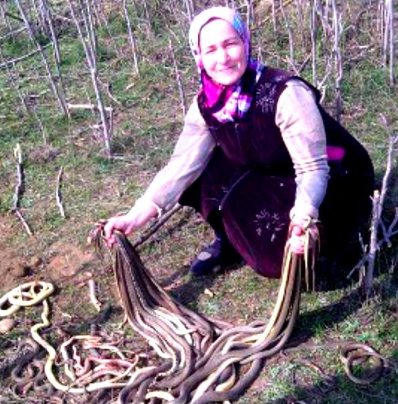 Пенсионерка наткнулась в своем огороде на гнездо змей...
