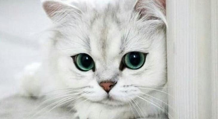 Как понять своего котика? По…