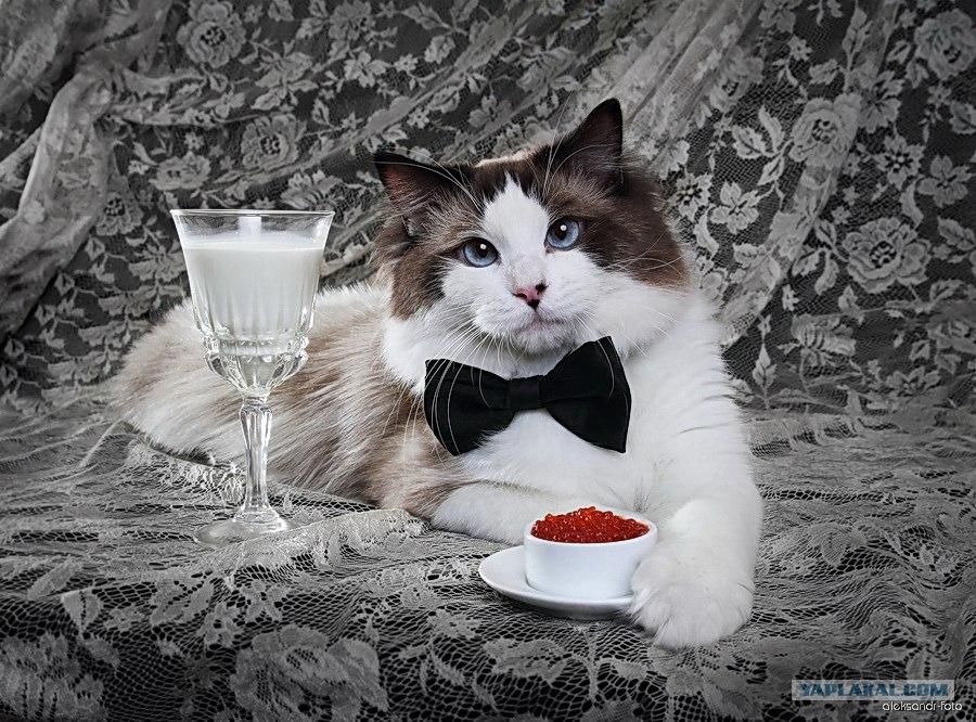 С днем рождения фото с котиком, открытки днем рождения