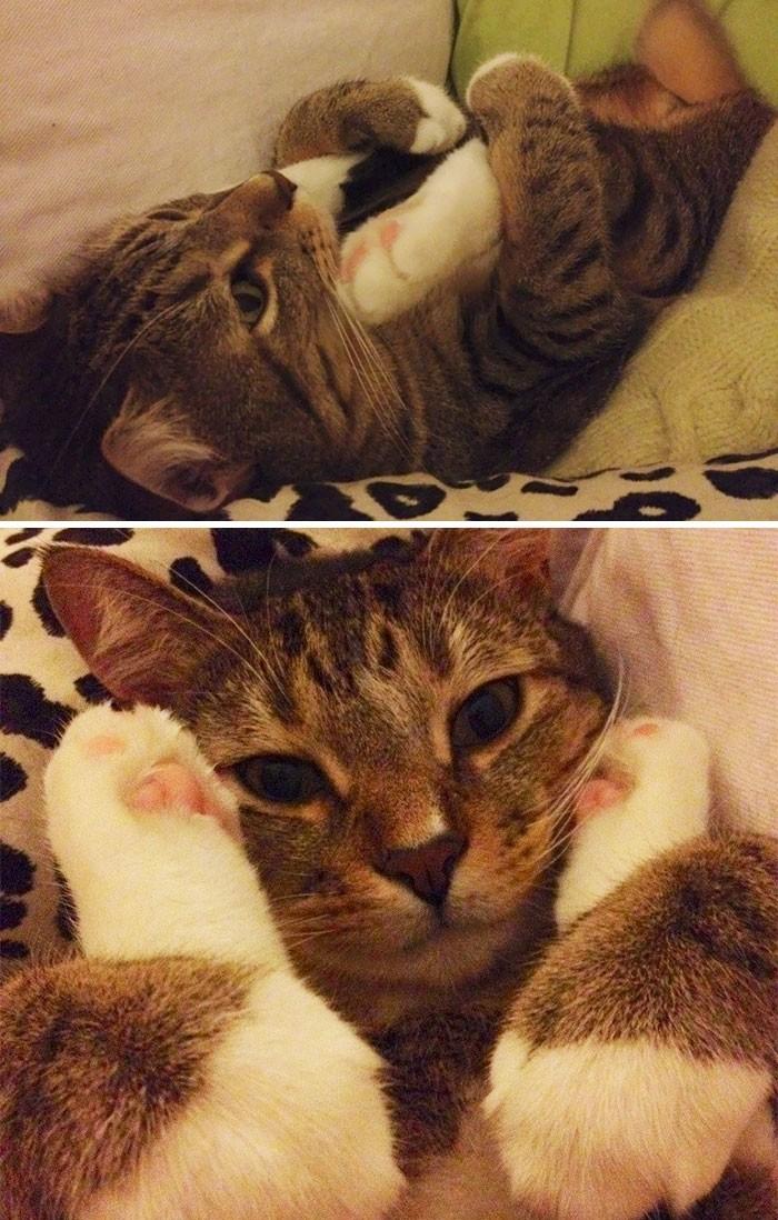 """""""Порой мой кот делает очень странные вещи"""" кошки, приколы, прикольные фото животных, смешные кошки"""