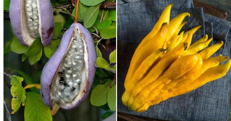 10 самых привлекательных фруктов мира
