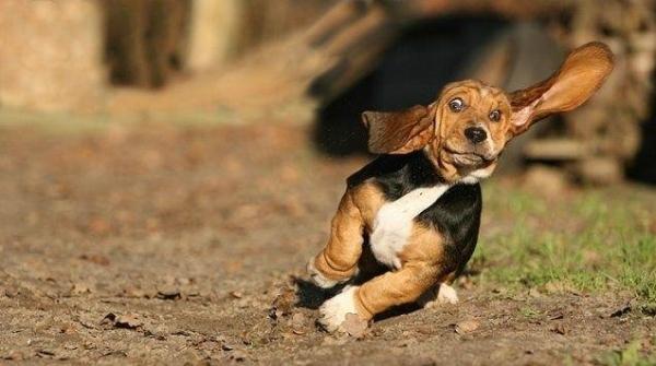 Собаки в движении