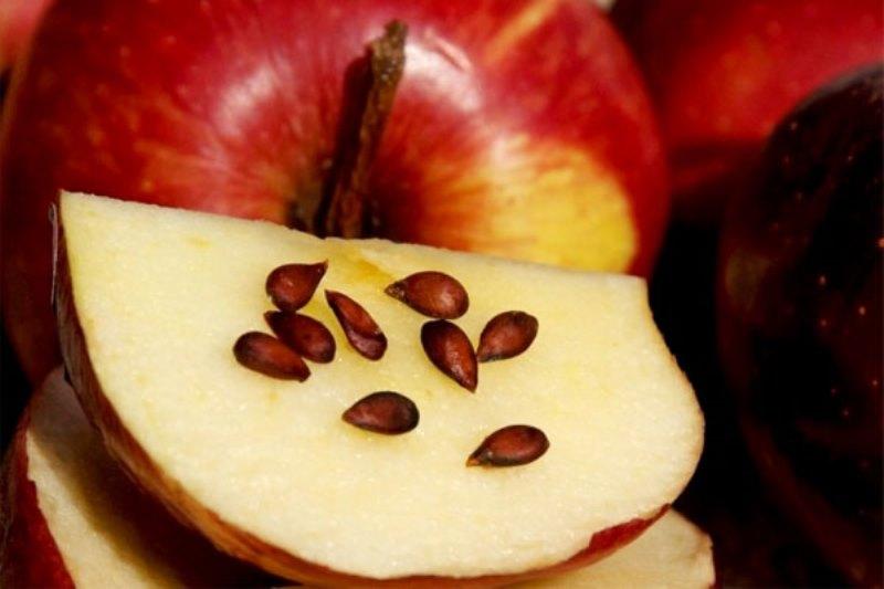 можно ли есть косточки в яблоках