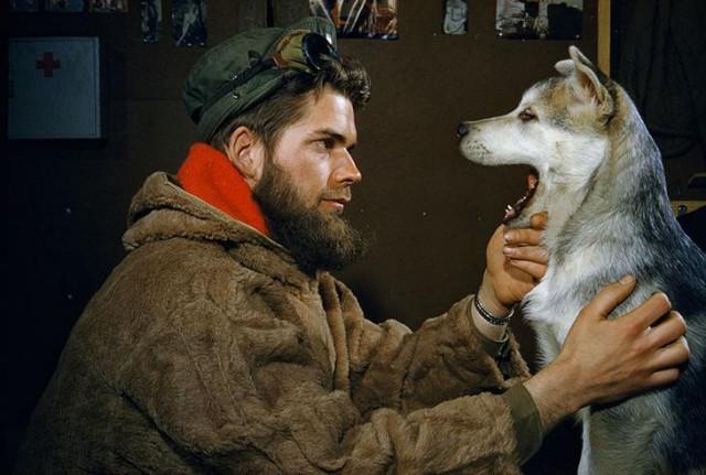 Мужчина осматривает пасть 10-месячного щенка аляскинского маламута в районе Южного полюса, 1957 national geographic, неопубликованное, фото