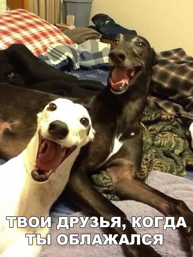 Смешные картинки собак с надписями до слез