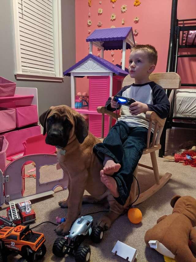 Родители наказали мальчика, а его верный пёс пошёл следом за ним и тоже стал в угол не всё так грустно