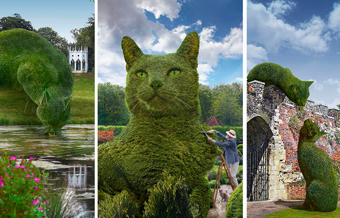 ФОТОИСКУССТВО. Зелёные коты Ричарда Сондерса