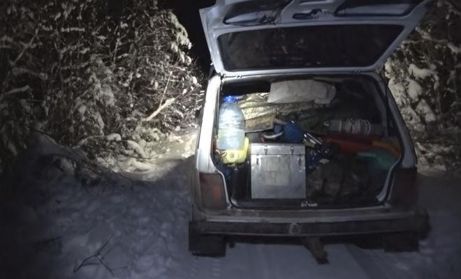 Ушел на неделю в лес и столкнулся с волками: спасла машина и фонарь волк,животные,машина,пес,Природа,Пространство,хищник