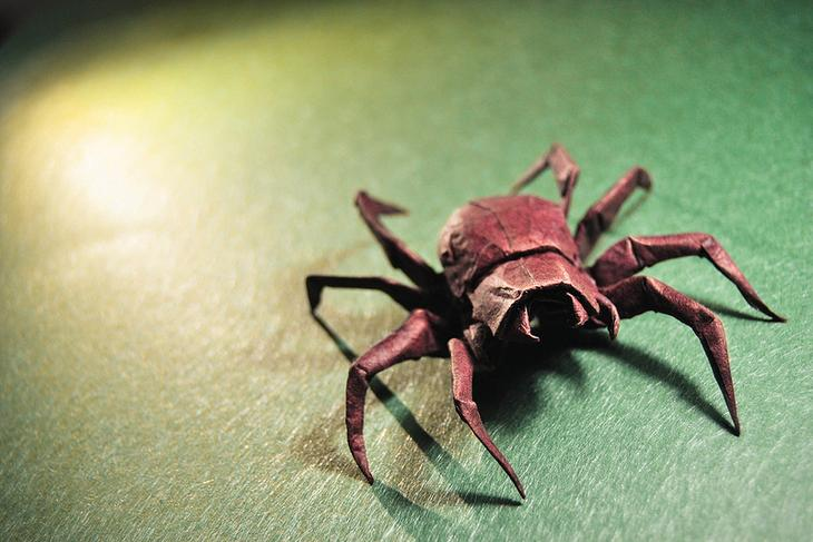 Origami Wolf Spider - Brian Chan