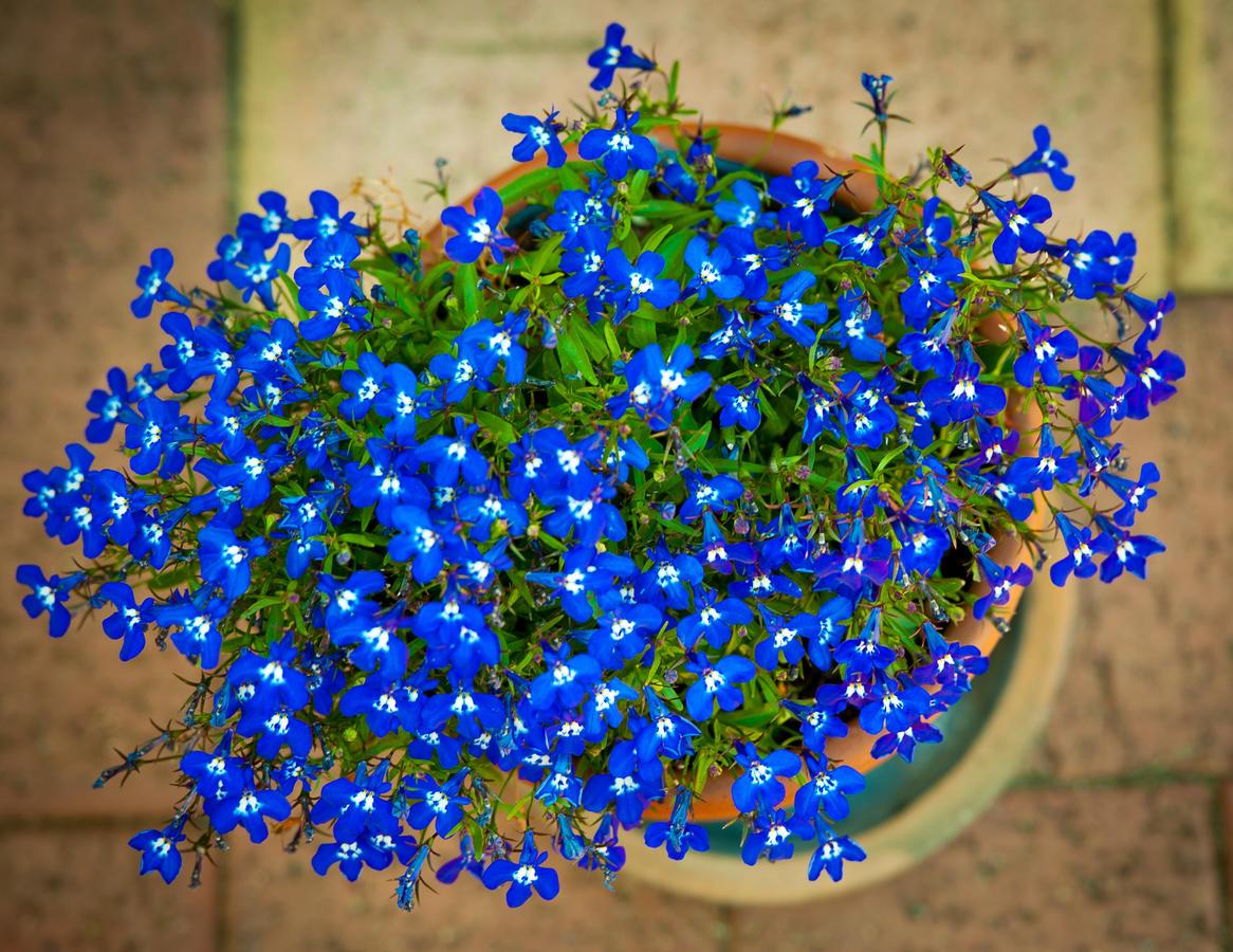 обувные мелкие голубые цветы названия и фото митрофанов этой странице