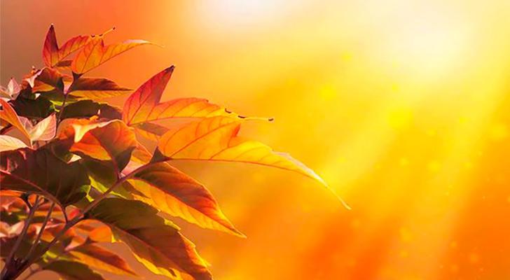 солнечный осенний день фото