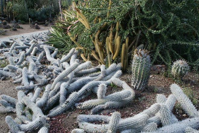 Самое странное растение мира: оно двигается по земле за счет корней и стеблей