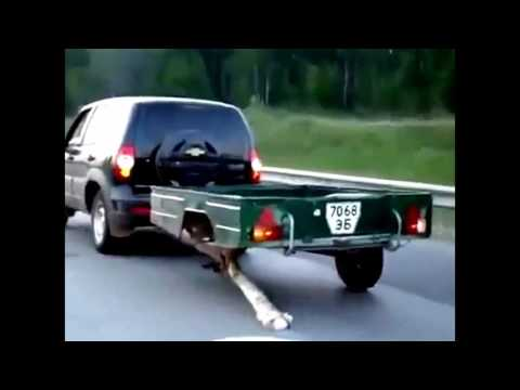 Приколы на автодорогах