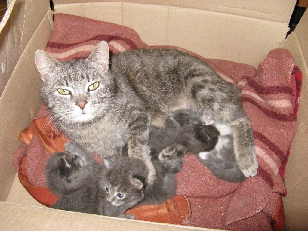 КОШКИН ДОМ. Как найти кошке хороших владельцев