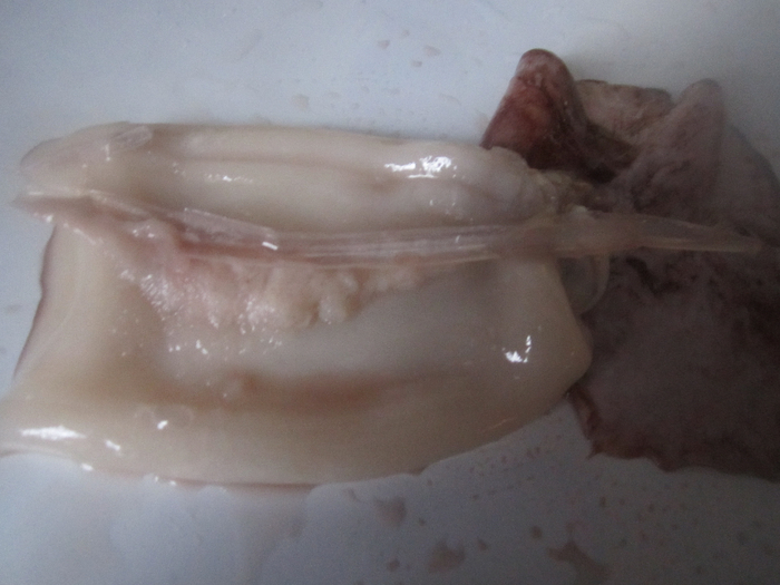 как выглядит икра кальмаров фото своевременном