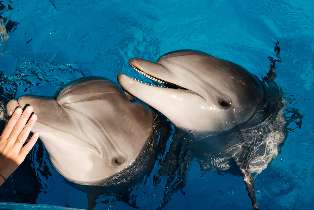 дельфины спасли людей