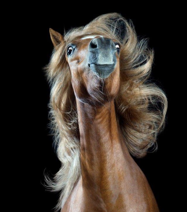 «Лошадиный стиль» в объективе фотографа Вибке Хаас