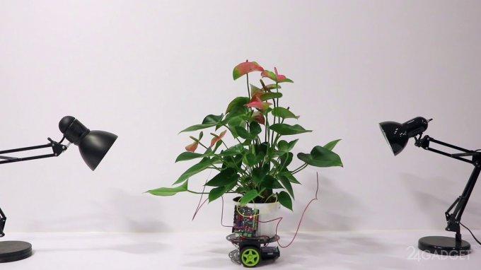 Elowan — растение-киборг из MIT
