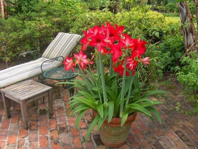 Основные правила ухода за комнатными растениями летом