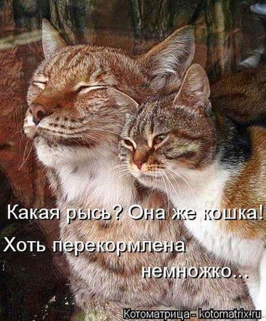Котейка Палыча...